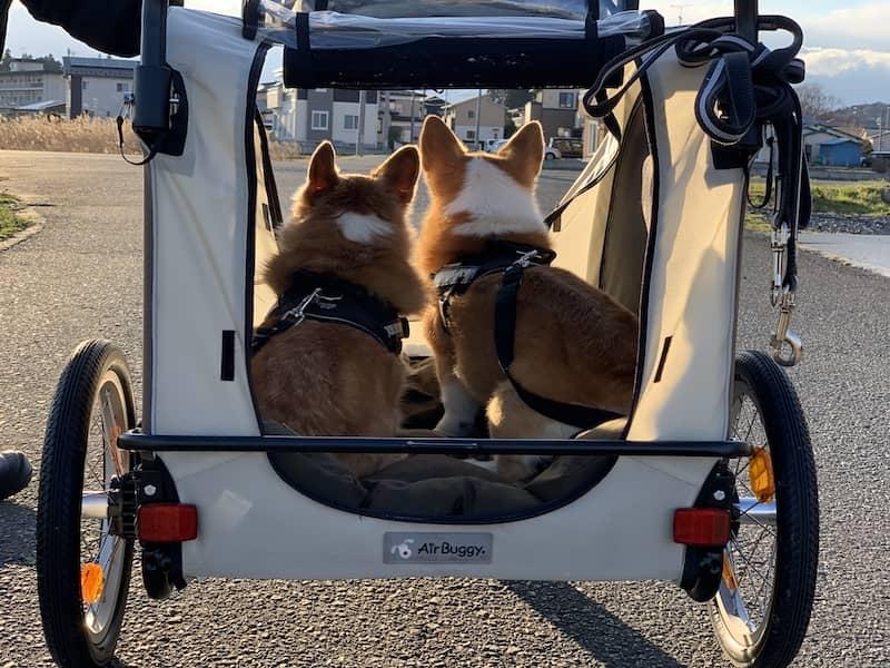 ペットカートに乗っている犬の後ろ姿