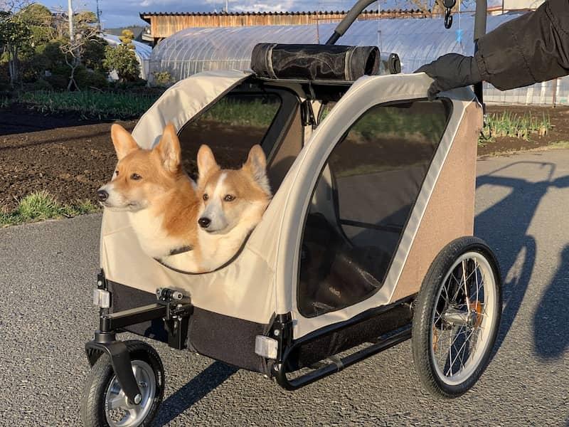 ペットカートに犬が2匹乗っている