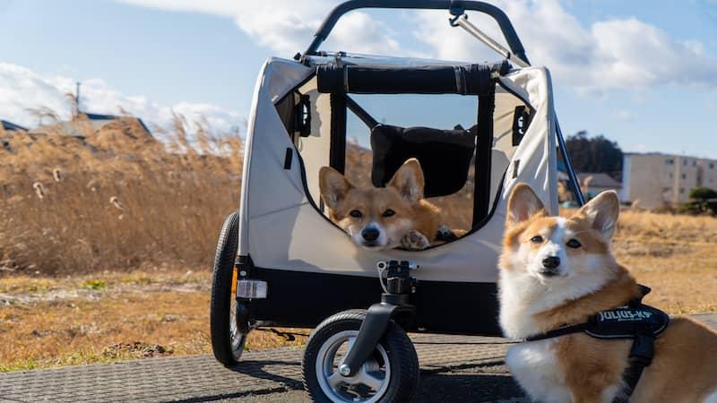 コーギー2匹とペットカート
