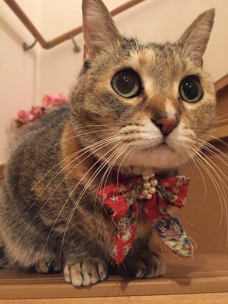 愛猫みみちゃん